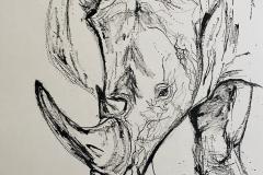 rhinosarus